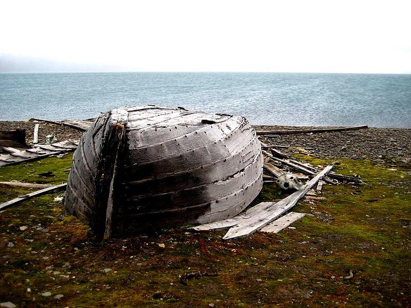 Cemitério de baleias belugas caçadas pelo homem